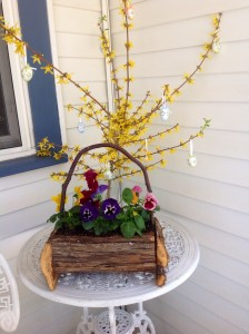 Easter still outside the office, with pansies and forsythia