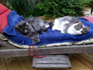 Oscar and Tibby - on a retired Towne Motel towel